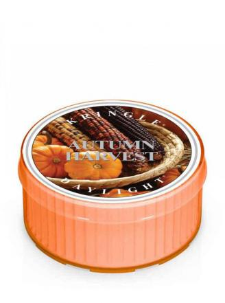 Kringle Candle  Autumn Harvest  Daylight Candle (1.25oz)