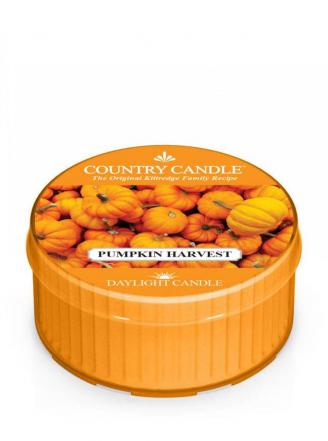 Country Candle  Pumpkin Harvest  Daylight (35g)