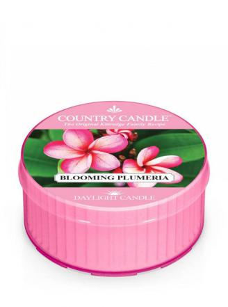 Country Candle  Blooming Plumeria  Daylight (35g)